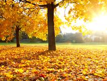 Herbstreisen